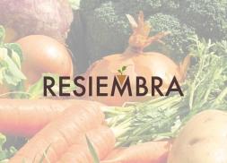 Diseño de logotipo para sector de jardinería
