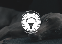 Diseño de logotipo para empresa de educación canina