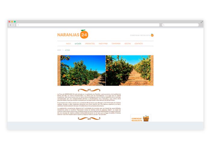 Diseño web para finca de naranjas
